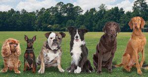Black Oak Dogs